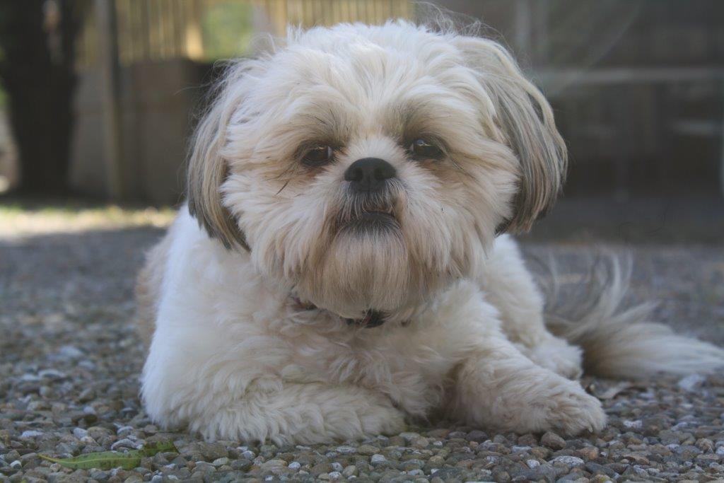 Dogs -Greenacres Motel Caravan Park
